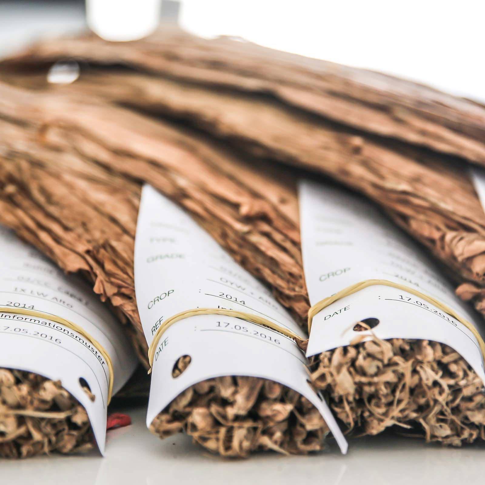 Zigarrendreher | Zigarrenroller | Trocadero | Zigarren | Drehen | Tabak | Banderole | Bauchbinde | Tabak | Sumatra | Brasilien | Indonesion | Cuba | Torpedo | Robusto | Churchill | Corona